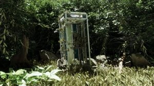 Phone in the Woods اثر Rishi Franklin